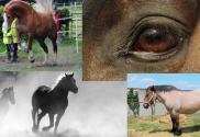 Afbeelding - Blog Freeze Fight Flight Flow Responses Reacties bij paarden en mensen - ClickerCoach