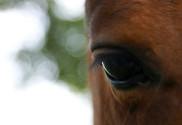 Afbeelding - Paard als spiegel
