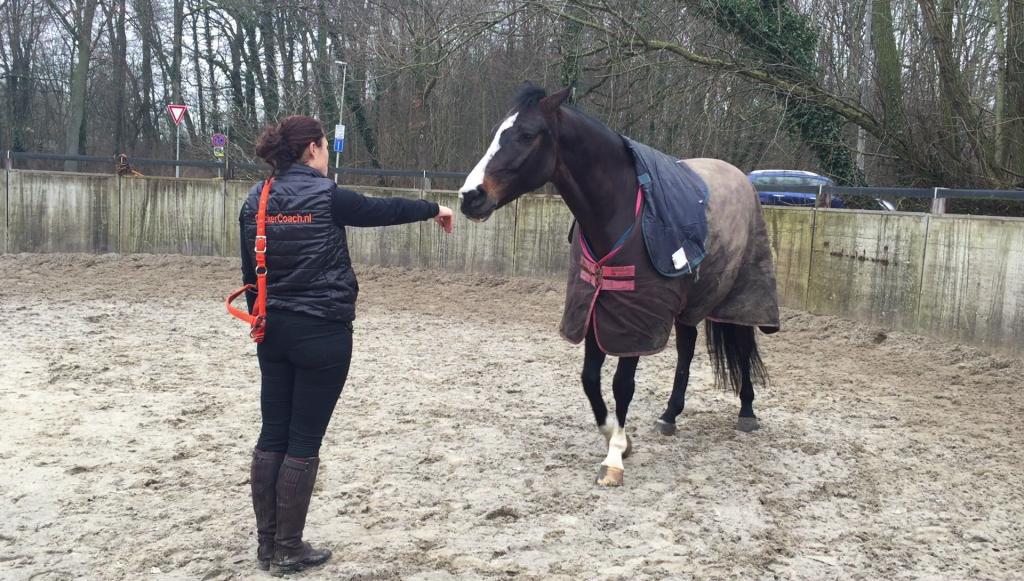 Foto - Artikel Equiday Halster om doen bij je paard clickerstijl 1 - ClickerCoach