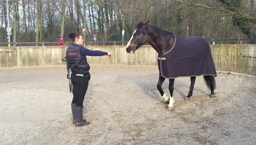 Foto - Artikel Equiday Hoofdstel om doen bij je paard clickerstijl 1 - ClickerCoach