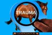 Afbeelding - Begin niet aan een getraumatiseerd paard tenzij met onze clickertraining - ClickerCoach